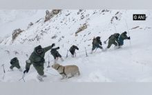 Ladakh avalanche: Search on for 5 missing personnel