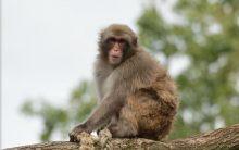 Taj Mahal police brandish catapults to scare monkeys away