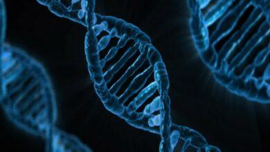 Photo of Genetic variants behind development of schizophrenia
