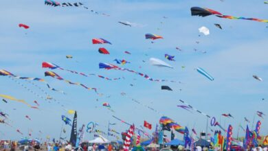 Photo of Markets flooded with colourful kites ahead of Makar Sankranti