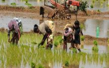 Fadnavis releases report on gender and water equality in agriculture