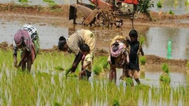 Photo of Fadnavis releases report on gender and water equality in agriculture