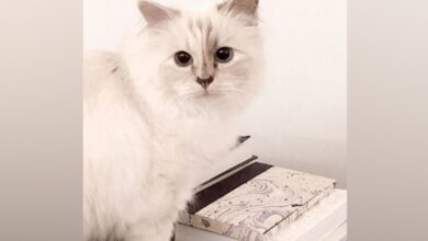 Photo of Here's what's next for Karl Lagerfeld's cat Choupette