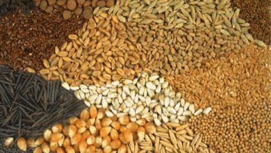 Photo of Foodgrain production increases to 281 million tonnes in 2018-19