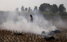 Cost-effective technology vital to curbing stubble burning: Mishra