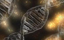 Skeleton DNA reveals Crusader soldiers' backgrounds