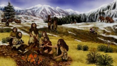 Photo of Neanderthals walked upright just like humans today