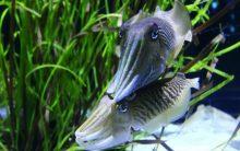 Squid may provide an eco-friendly alternative to plastics