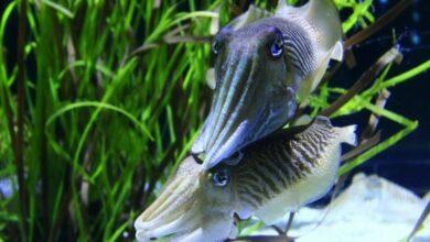 Photo of Squid may provide an eco-friendly alternative to plastics