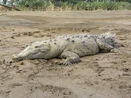 Photo of Crocodile at JALPALLY TALAB