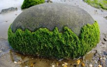Researchers find way to turn algae into fuel
