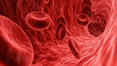 Photo of Blood holds key to liver regeneration, study suggests