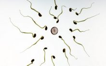 Damage to sperm DNA can lead to repeat miscarriages