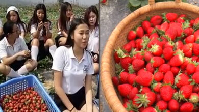 Photo of Integrated strawberry farming leads to new dawn for Nagaland youths