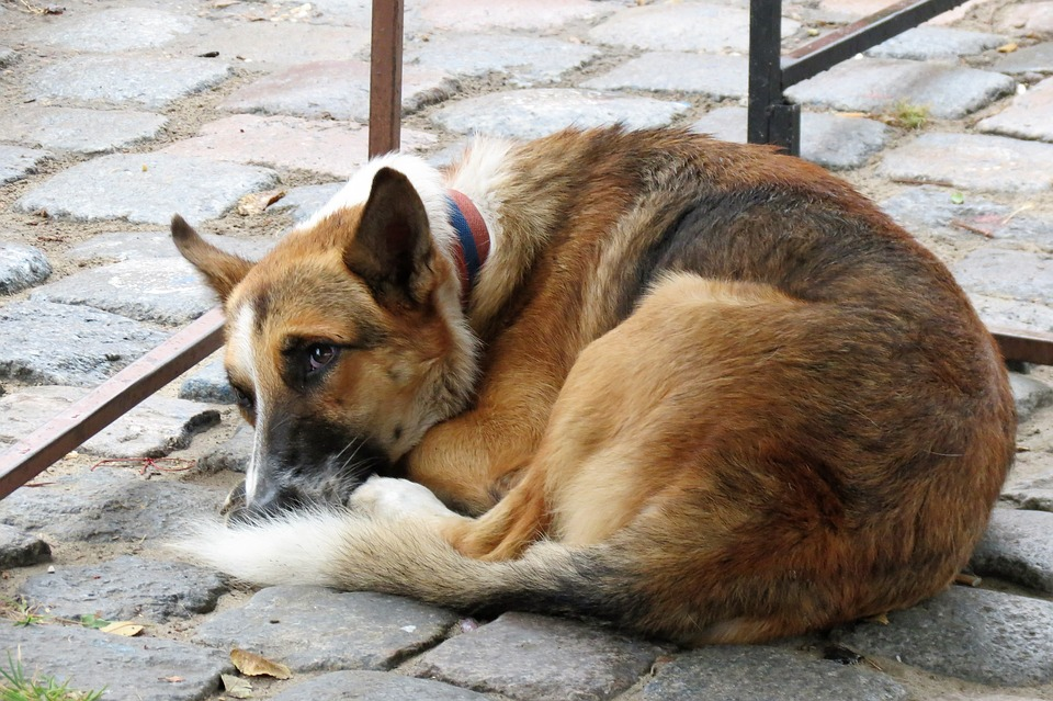 Iraqi doctor arrested over mysterious deaths of pet dogs in Gurugram