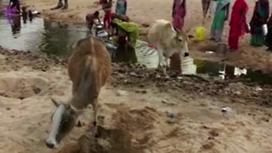 Photo of In this C'garh village, locals and animals are forced to use common source of water