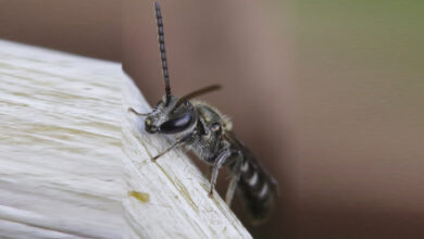 """Photo of In a """"world's first"""", 4 live bees inside woman's eye feeding on her tears"""