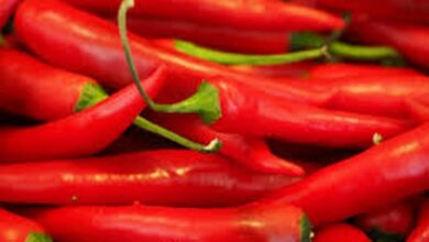 Photo of Spicy compound from chilli peppers could reduce spread of lung cancer, shows study