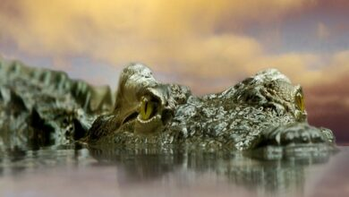 Photo of Jurassic crocodile discovery sheds light on reptiles' family tree