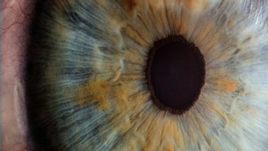 Photo of Nature has cure for blindness due to diabetes: Study