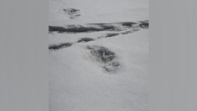 Photo of Indian Army finds the abominable snowman in the Himalayas?