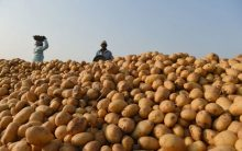 Gujarat potato growers want compensation from PepsiCo