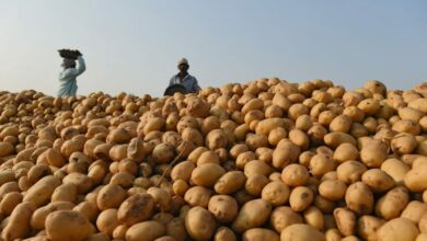 Photo of PepsiCo finally withdraws all lawsuits against Gujarat potato farmers