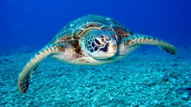 Photo of Global warming impacts marine creatures the most, reveals study