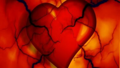 Photo of Placental stem cells can regenerate new heart cells after heart attack, study finds