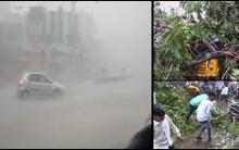 Rain wreaks havoc in Hyderabad; Many trees uprooted