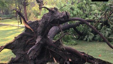 Photo of Hyderabad: around 80 trees fall in Zoo during Saturday rain; mar visitors' fun