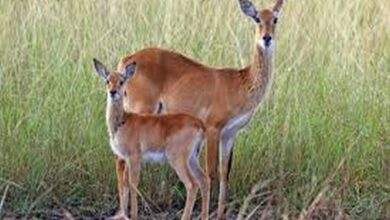 Photo of Mammals' brain size, fertility may depend on who cares for offspring