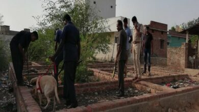 Photo of Nellore: Stray dog chews country-made bomb, dies