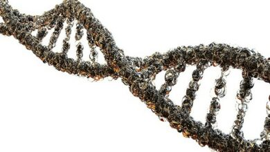 Photo of Scientists identify new genes responsible for four serious mental illnesses
