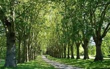 Trees in cities die early, resulting in loss of street-tree carbon storage