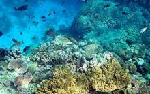 Global efforts needed to save coral reefs: Study