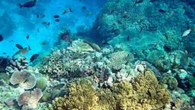 Photo of Global efforts needed to save coral reefs: Study