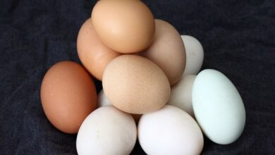 Photo of Dietary cholesterol or egg consumption do not increase the risk of stroke: Study