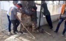 New India: 3 Muslims thrashed by Gau Rakshaks, forced to chant 'Jai Shri Ram'