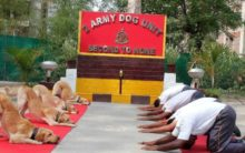 'Paw'some moves: Army dogs perform yoga alongside their trainers