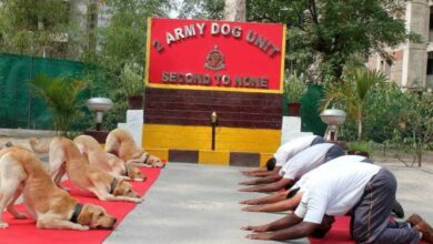 Photo of 'Paw'some moves: Army dogs perform yoga alongside their trainers
