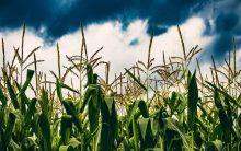 Climate change affecting food production globally