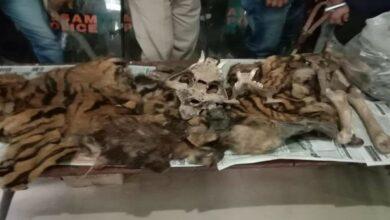 Photo of Assam: 3 arrested for possessing tiger hide, teeth, bones