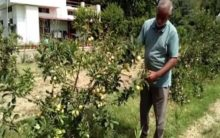 Hoshiarpur farmer sets a shining example of apple cultivation in Punjab