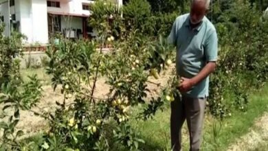 Photo of Hoshiarpur farmer sets a shining example of apple cultivation in Punjab