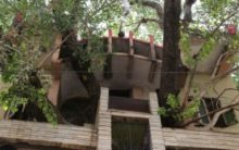 MP family branches out with novel tree house