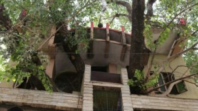 Photo of MP family branches out with novel tree house