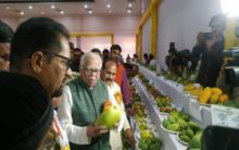 After 'Modi sarees' and 'jackets', get ready for 'Modi mangoes'!