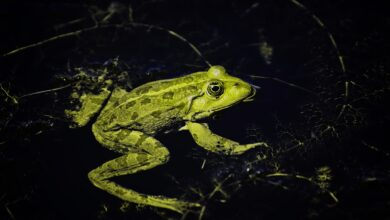 Photo of Light at night harmful for amphibians