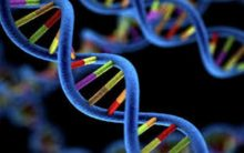 Study identifies 27 genetic variants associated with disease in multiethnic genome